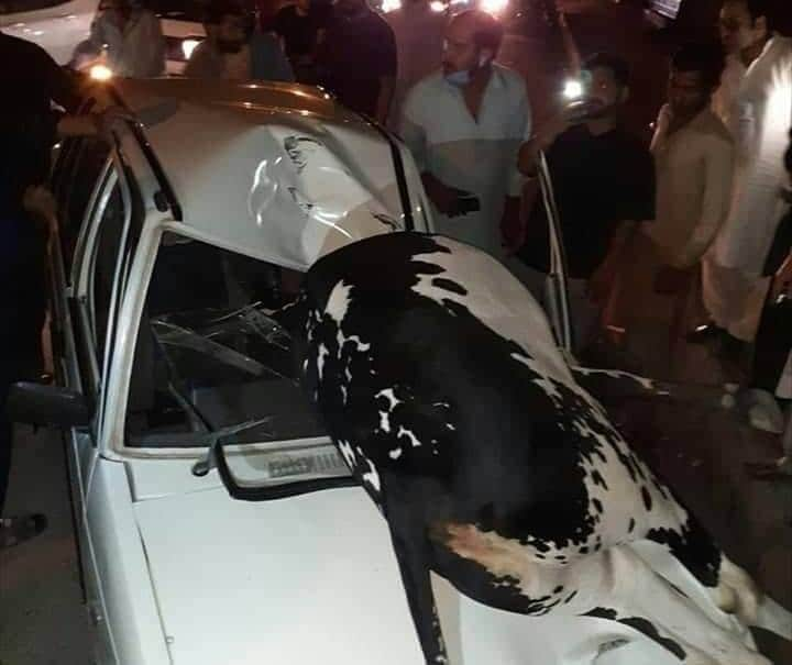 Ox hit in car and died in Rawalpindi
