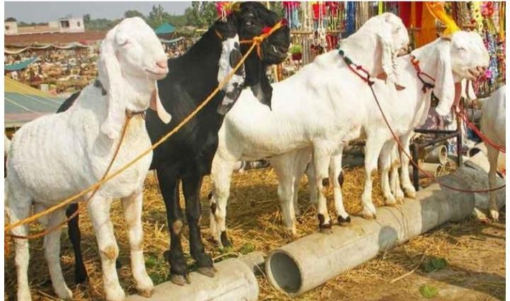 Truck full of goats robbed in Karachi