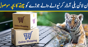 A couple received a baby leopard on ordering a cat online