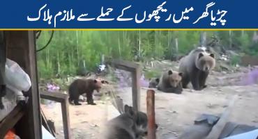 Bear attack kills employee at zoo