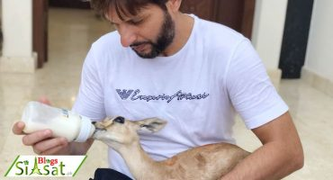 DHA Administration Removes Animals From Shahid Afridi's Residence