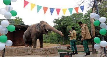The President said goodbye to 'Kavaan' the elephant.